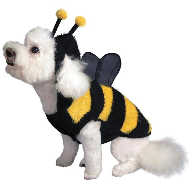 Hi everyonee ...  sc 1 st  Bichon Finder : halloween costume finder  - Germanpascual.Com